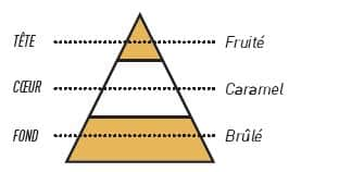 pyramide olfactive sense blond doux - T Blond Doux Sense