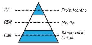 pyramide olfactive sense menthe glaciale - E-liquide Menthe Glaciale Sense