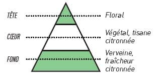 pyramide olfactive sense verveine - E-liquide Verveine Sense
