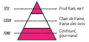 pyramide olfactive sense fraise gariguette - E-liquide Fraise Gariguette Sense