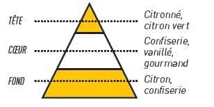 pyramide olfactive bonbon citron - E-liquide Bonbon Citron Sense