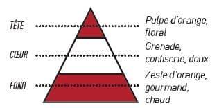 pyramide olfactive grenade - E-liquide Grenade Orange Sanguine Sense