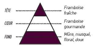 pyramide olfactive mure framboise 10 - E-liquide Mure Framboise Sense