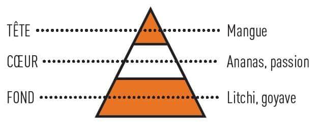 pyramide olfactive tropicman 09 - E-liquide Tropic'Man Insolite Sense